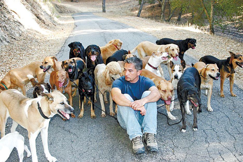 סיזר והכלבים